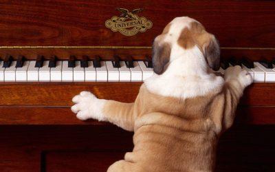 """Despre """"furnici"""": teoria muzicala pe intelesul tuturor. Doar in Promotia C15."""